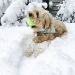 Snowballs instead of dog paws?