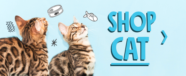 shop cat products on petflow.com
